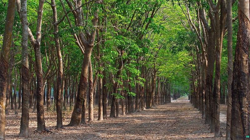 Thủ tục và chi phí chuyển đổi đất trồng cây lâu năm lên đất thổ cư